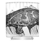 Southern Painted Turtle Shower Curtain
