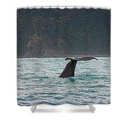 Sperm Whale Diving  Shower Curtain