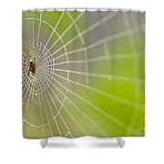 Spider Web With Dew Drops With Spider On Web Shower Curtain