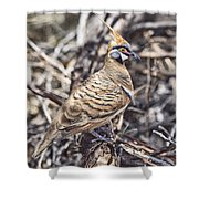 Spinifex Pigeon Shower Curtain
