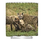Spotted Hyaena Shower Curtain