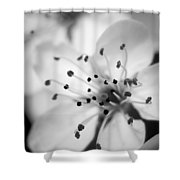 Spring Blooms 6692 Shower Curtain