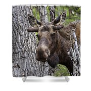 Spring Bull Shower Curtain