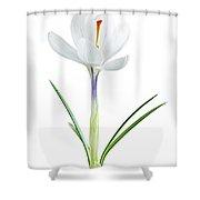 Spring Crocus Flower Shower Curtain