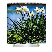 Spring Daffodils. Park Keukenhof Shower Curtain by Jenny Rainbow