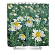 Spring Daisies Shower Curtain