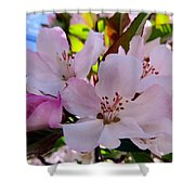 Spring Form Shower Curtain