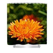 Spring Fresh  Shower Curtain