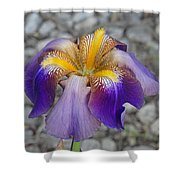 Spring Iris Shower Curtain