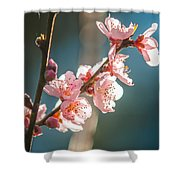 Spring Peach Tree Blossom Shower Curtain