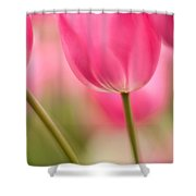 Spring Trio Shower Curtain by Mike Reid