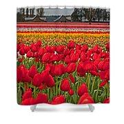 Springtime Tulip Field Art Prints Shower Curtain