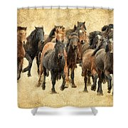 Stampede Of Wild Horses Shower Curtain