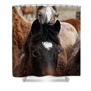 Stampede Shower Curtain