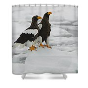 Stellers Sea Eagles Shower Curtain