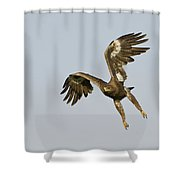 Steppe Eagle Aquila Nipalensis Shower Curtain
