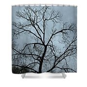 Stormy Trees Shower Curtain