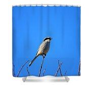 The Lookout Shrike Or Butcher Bird Art Shower Curtain