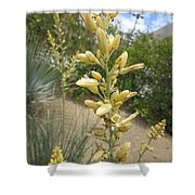 1 String Flowers    Photographed Las Vegas May 2014 Shower Curtain