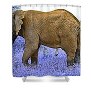 Styled Environment-the Modern Elephant Bull Shower Curtain
