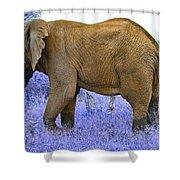 Styled Environment-the Modern Elephant Bull Shower Curtain