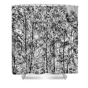 Summer Forest Trees Shower Curtain