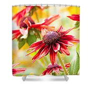 Summer Soltice Shower Curtain