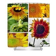 Sunflower Collage   Shower Curtain