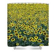 Sunflower Nirvana 13 Shower Curtain