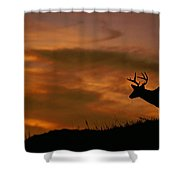 Sunset Buck Shower Curtain