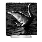 Swan Wingspan Shower Curtain