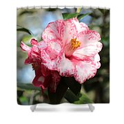 Sweet Camellia Shower Curtain