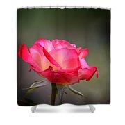 Sweet October Rose Shower Curtain