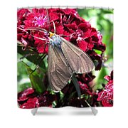 Sweet William Named Sooty Shower Curtain