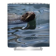 Swimming Sea Lion Shower Curtain