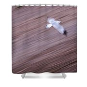 Swooping Shower Curtain