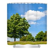 Sycamore  Acer Pseudoplatanus Shower Curtain