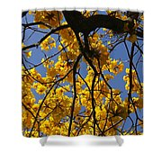 Tabebuia Tree Blossoms Shower Curtain