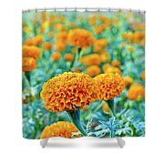 Tagetes Erecta / Aztec Marigold Flower Shower Curtain