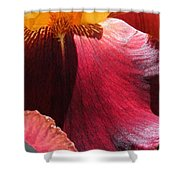 Tall Bearded Iris Named Ancient Echoes Shower Curtain