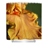 Tall Bearded Iris Named Penny Lane Shower Curtain