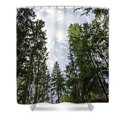 Tall Spruce Trees Shower Curtain