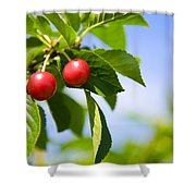 Tart Cherries Shower Curtain