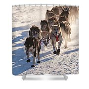 Team Of Sleigh Dogs Pulling Shower Curtain
