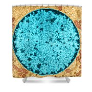 Tem Of Leydig Cell Shower Curtain