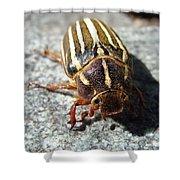 Ten Lined June Beetle Shower Curtain