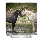 Tender Moments - Wild Horses  Shower Curtain