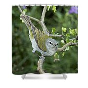 Tennessee Warbler Shower Curtain