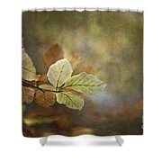 The Beauty Of The Common Shower Curtain