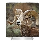 The Bighorn Shower Curtain